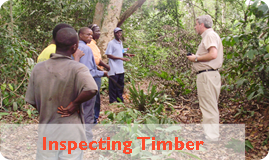 Inspecting Timber